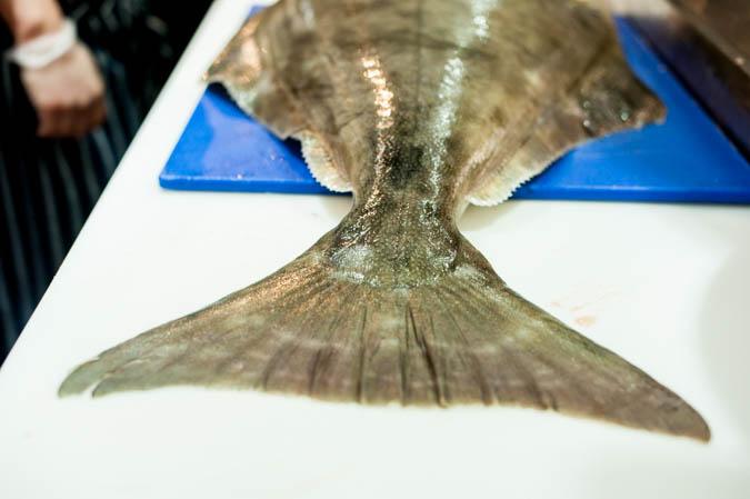 whole halibut