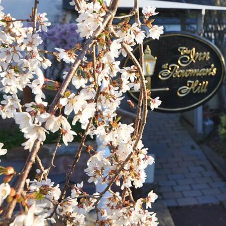 Bucks County: The Inn at Bowman's Hill